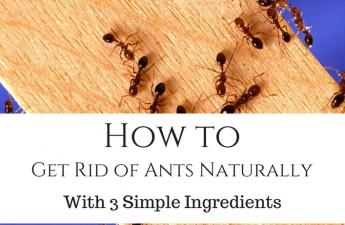 get rid of ants naturally for cheap